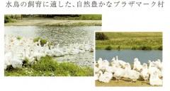 羽毛掛けふとん_KL3520_02